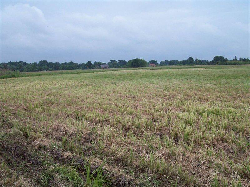 Działka rolna na sprzedaż ok. Wrocławia, Polna  700000m2 Foto 4