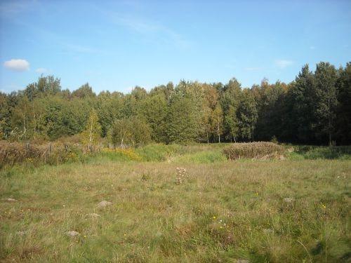 Działka budowlana na sprzedaż Oborniki Śląskie, Siemianice  5000m2 Foto 6