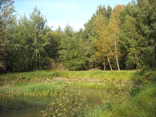 Działka budowlana na sprzedaż Oborniki Śląskie, Siemianice  5000m2 Foto 5